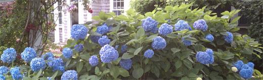 floweringshrubs