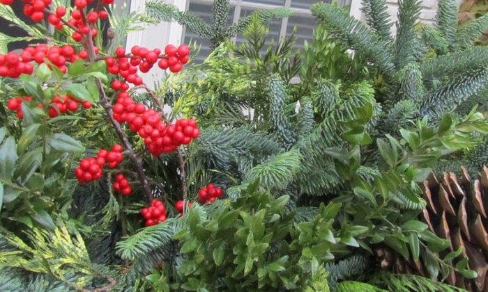 holidaygreens_blank