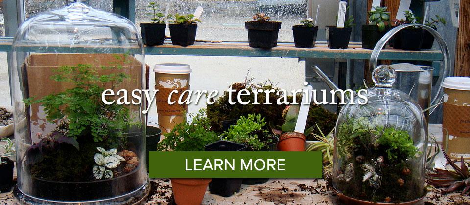 terrariums_learnmore