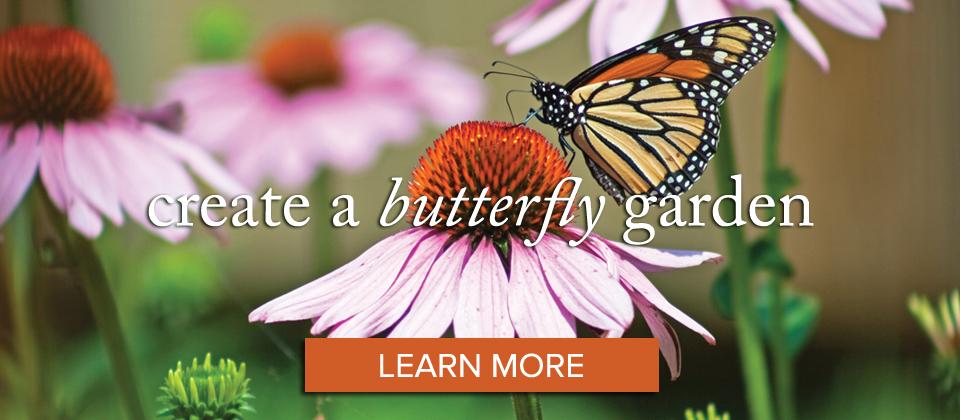 1butterfly_learn