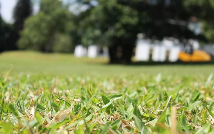 reviving-your-lawn