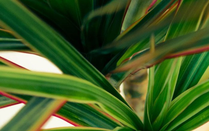 houseplant_Blank