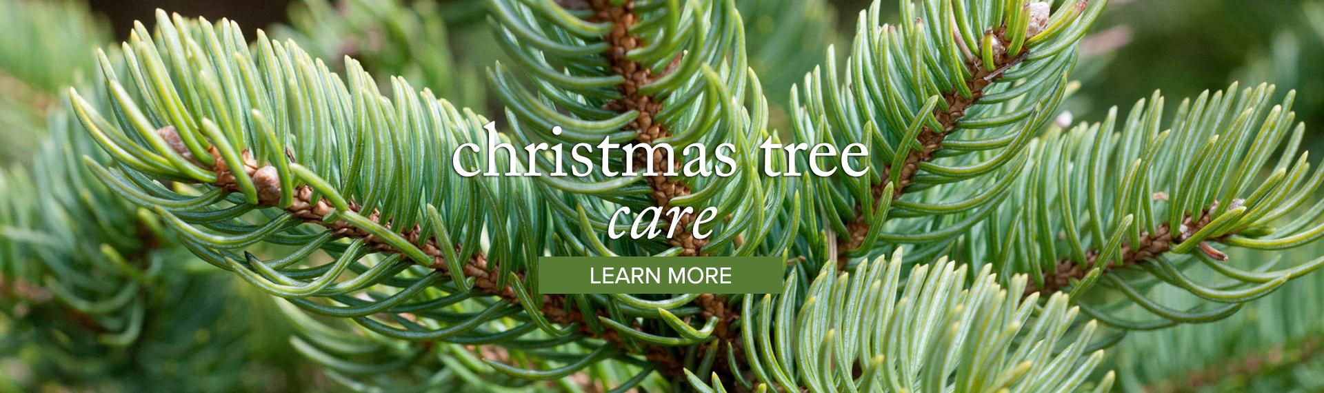 christmas_learn