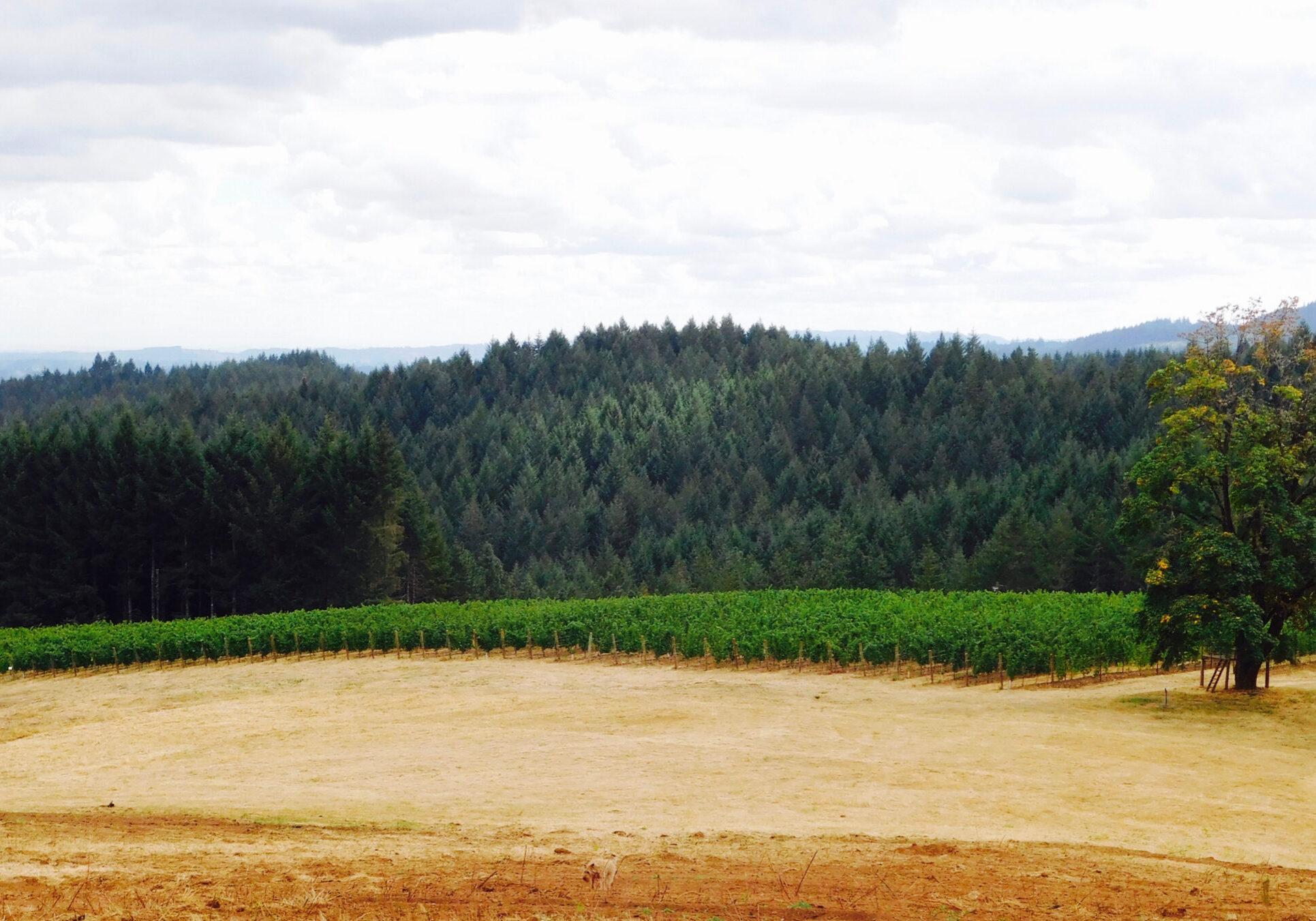 vineyard horizontal