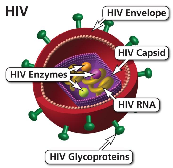 HIV virus image