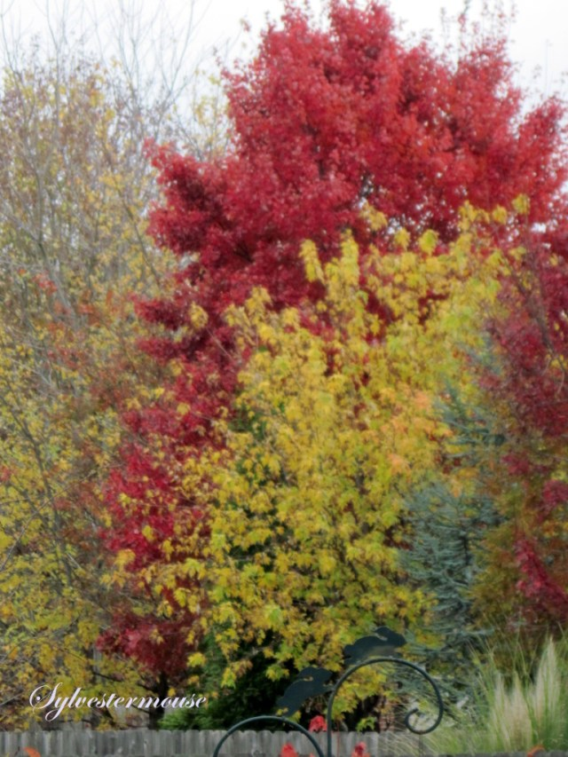Fantastic Fall Foliage