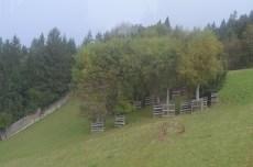 Alpenwildpark