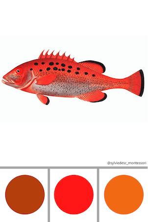 Cartes pour les couleurs des poissons