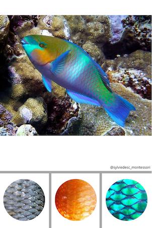 Cartes pour observer les poissons