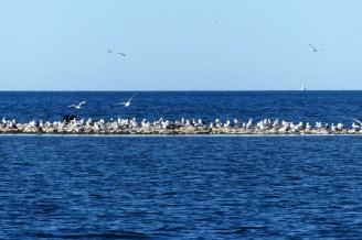 Kanske den fågeltätaste ön vi sett i Sverige.
