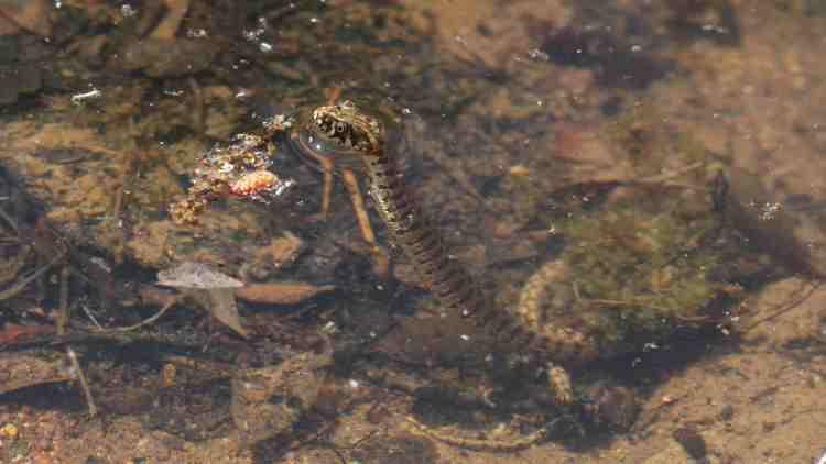 SYMBIODIV Votre bureau d'études et de conseils en écologie SYMBIODIV ressource en eau milieu aquatique Loi sur l'eau lac impact flore faune eaux souterraines dossier loi sur l'eau déclaration cours d'eau autorisation