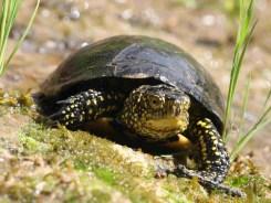 SYMBIODIV Votre bureau d'études et de conseils en écologie intérêt public majeur interdiction destruction espèces protégées dossier de demande de dérogation dossier CNPN compensation