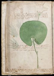 800px-Voynich_Manuscript_(6)