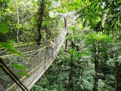 The Iwokrama canopy walk