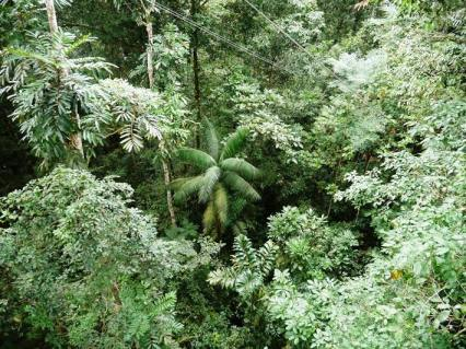 a view of the rain forest from the canopy