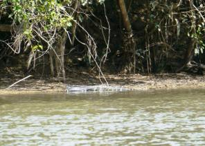 Not a river you want to fall into ... the shores were lined with caimans