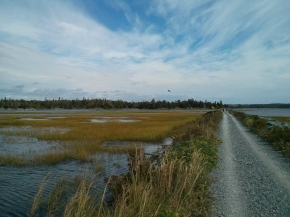 Salt Marsh trail hike, 2016. Click to start the slideshow.