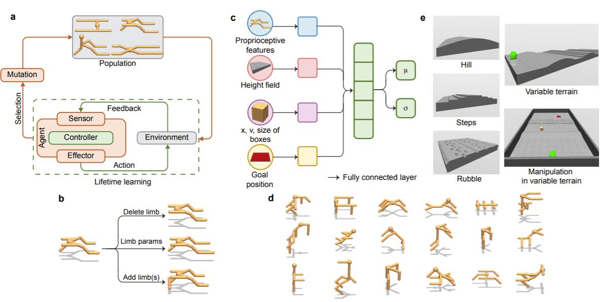 Stanford University Deep Evolutionary RL Framework Demonstrates Embodied Intelligence via Learning and Evolution