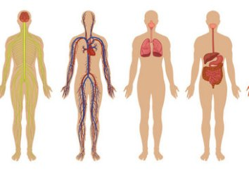 Dominant Body Systems: a Look at Your Unique Body
