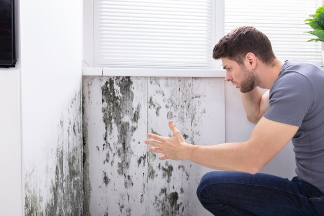 Failing To Fix Mold Will Reduce The Value Of Your Property!
