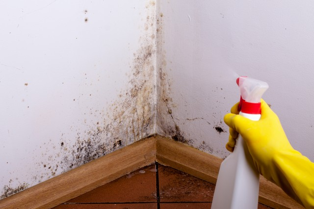 Mold Myths!