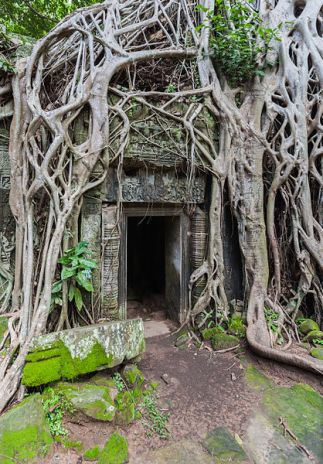Ta Phrom Temple, Angkor, Cambodia © Diego Delso with CCLicense