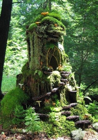 Forest Mossy Palace © Sally J. Smith