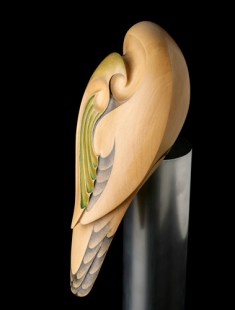 Kaka, New Zealand Bush Parrot © Rex Homan