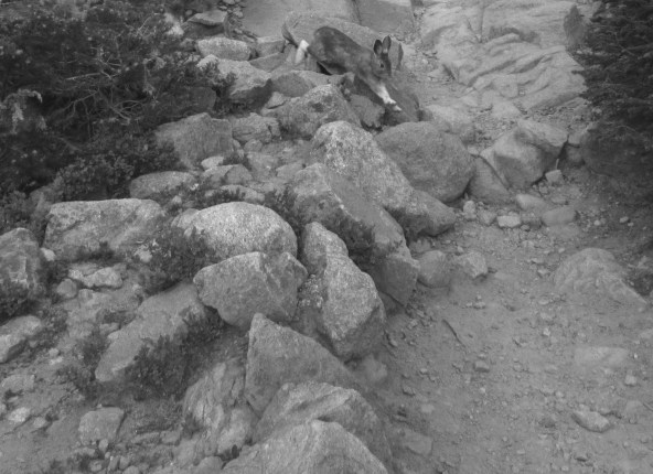 Rabbit's Getaway © Katherine McDaniel, 2015