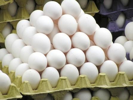 egg-818191_960_720