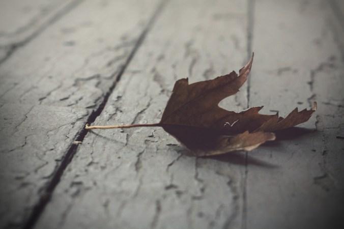 dead-leaf.jpg