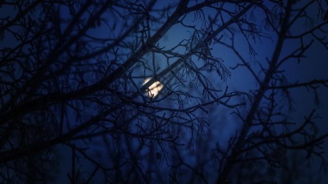 blue-night-1252017_960_720