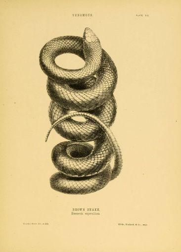 The_snakes_of_Australia_(Plate_VII)_(5981598613)