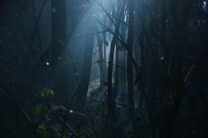 landscape-tree-nature-forest-light-fog-1206215-pxhere.com (1)