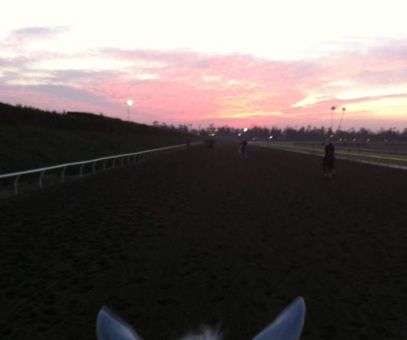 Dirty Jobs: Assistant Trainer