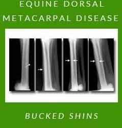 Equine Dorsal Metacarpal Disease — Bucked Shins