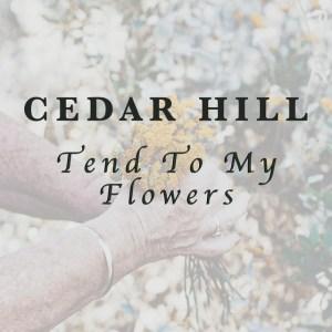 Cedar Hill, bluegrass, mandolin, fiddle, Mountain Fever Records, Syntax Creative - image