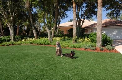 Synthetic Turf International SoftLawn Pet Turf K9 Artificial Grass