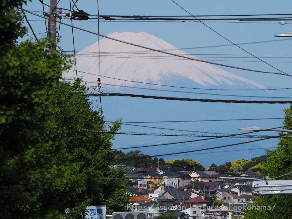 湘南桂台 富士見通り 富士山