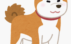 犬の抜け毛の多い時期と対策は?病気が原因の場合もある?
