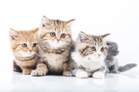 猫の腎不全・尿毒症の症状や原因【治療や食事・予防法は?】