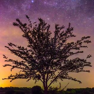 Астропейзаж с деревом