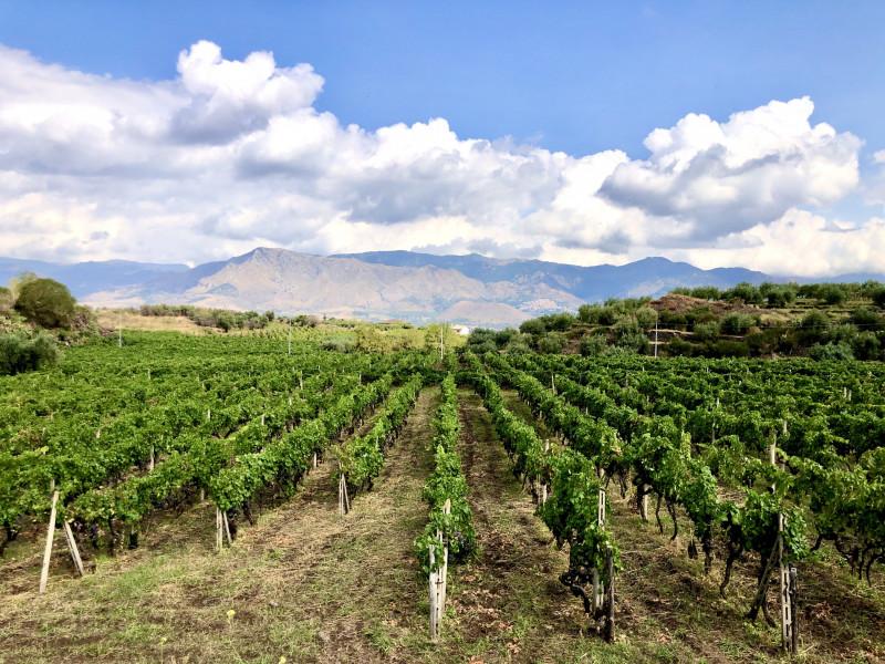 Contrada La Marchese - Donnafugata Wine