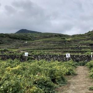 Donnafugata Pantelleria