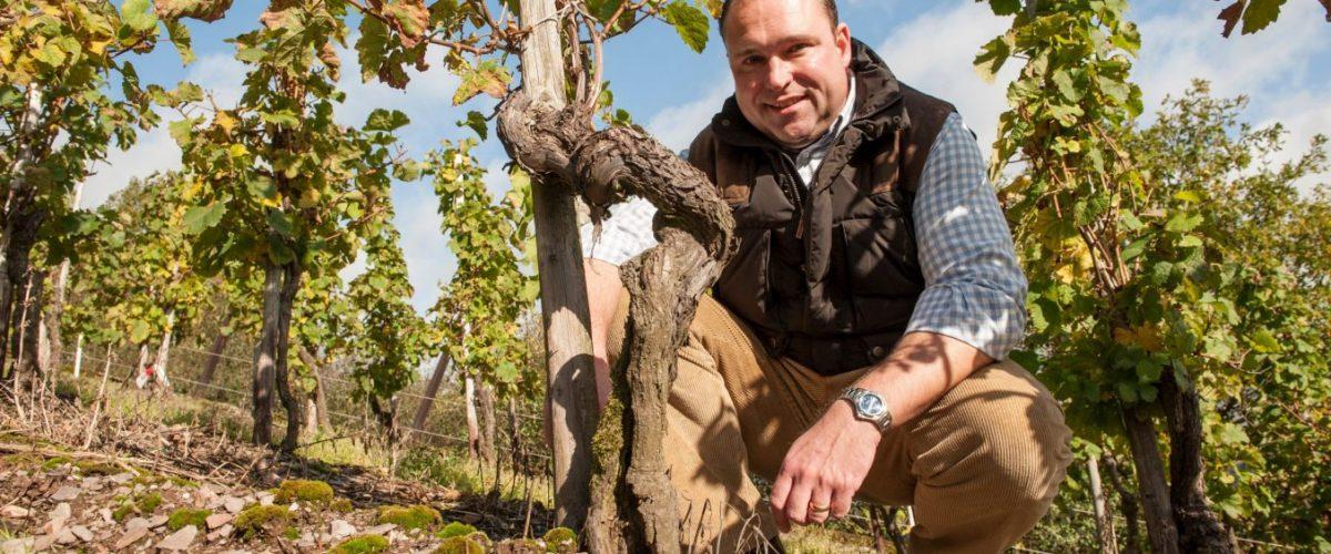 Wine Of The Week – Nik Weis Mosel Rieslings