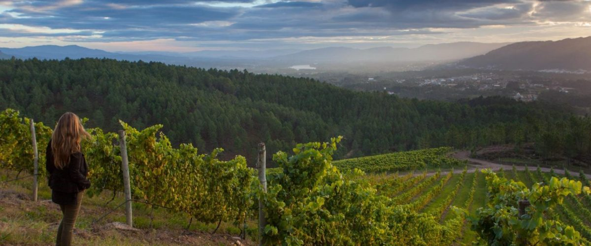 Your Passport To Rias Baixas – Explore Three Incredible Albariños