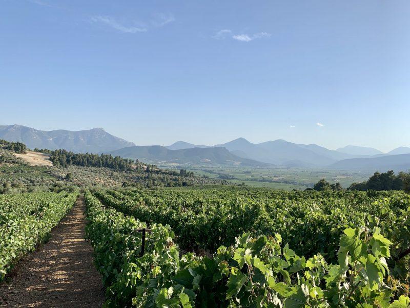 Lantides Winery Nemea