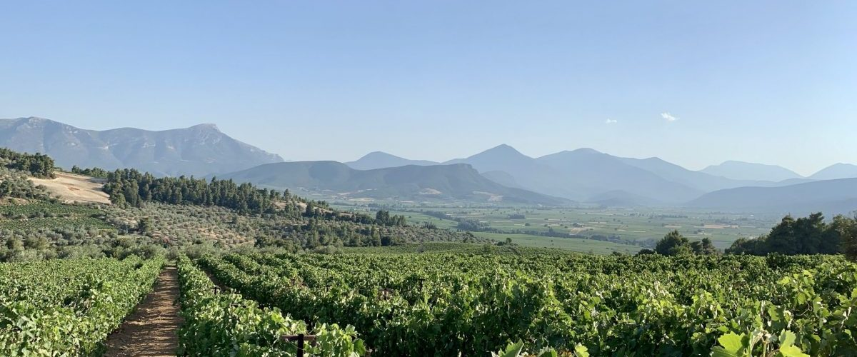 Lantides Winery – Distinguished Wines From The Peloponnese