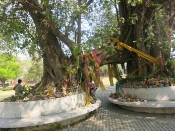 A sacred tree nearby