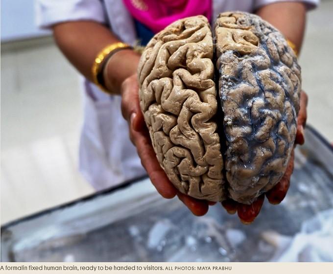 brain's two hemispheres